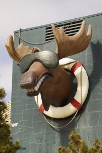 Photo:  Funny Picture Moose Wearing Glasses
