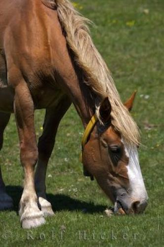 Photo:  Grazing Horse Bonaigua Pass Catalonia Spain
