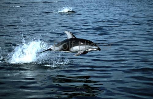 Photo:  picture of the dolphins