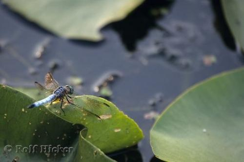 Photo:  Algonquin Insect