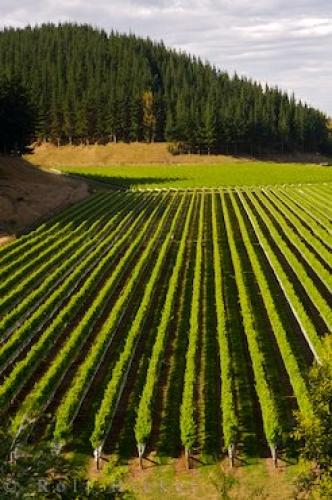 Photo:  Picture Of Mission Estate Hawkes Bay