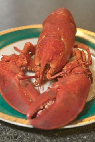 Fresh Home Prepared Red Lobster