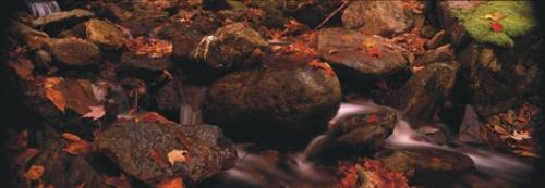 Autumn In Bay Of Fundy