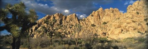 panoramic joshua tree
