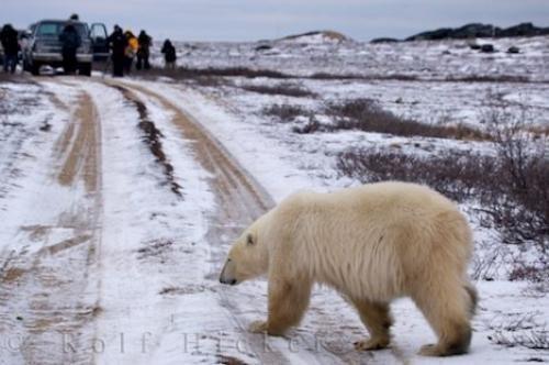 Photo:  Photography Workshop Churchill Manitoba Canada