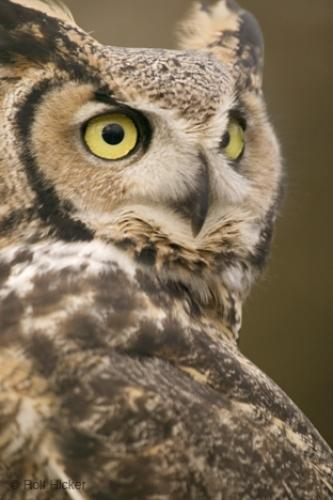 Owl Pictures
