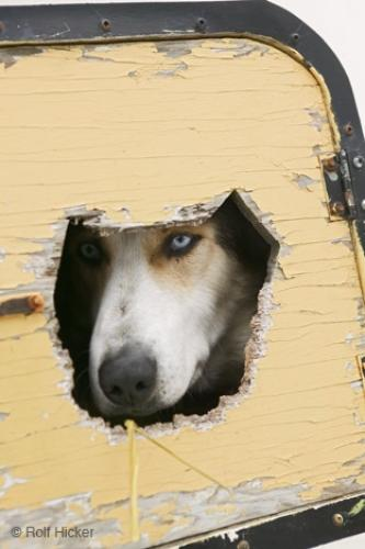 Photo:  Funny Dog Pictures