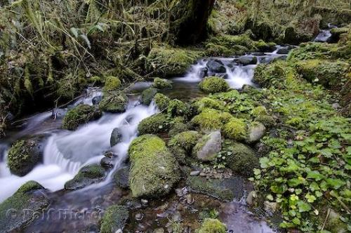 external image queets_rain_forest_t0431.jpg