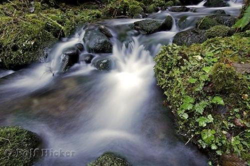 http://www.hickerphoto.com/data/media/170/rainforest_rivers_t0427.jpg