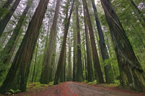 Redwood National
