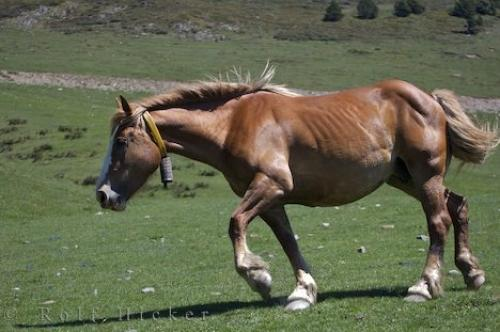 Photo:  Photo Of A Running Horse