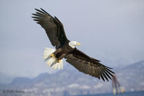 Path Stock Photos Eagle