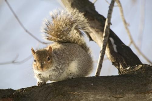 Photo:  Squirrel Pictures Animal in Tree