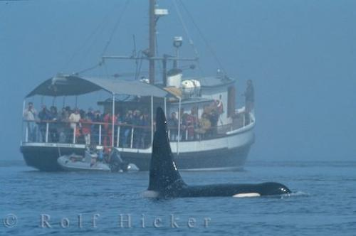 Photo:  Whale Watching Boat Tour Vancouver Island