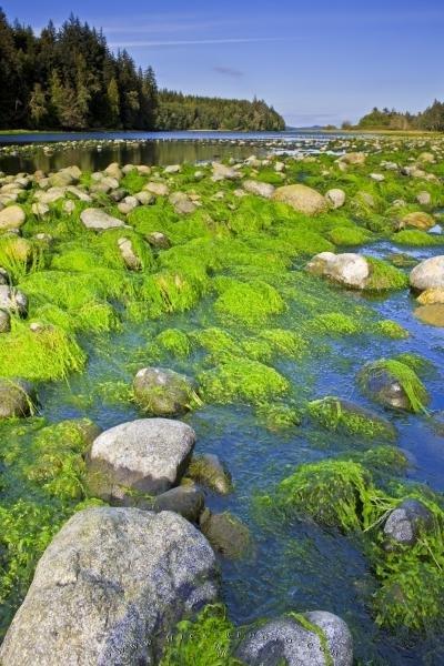 Photo:  Nimpkish River Shoreline