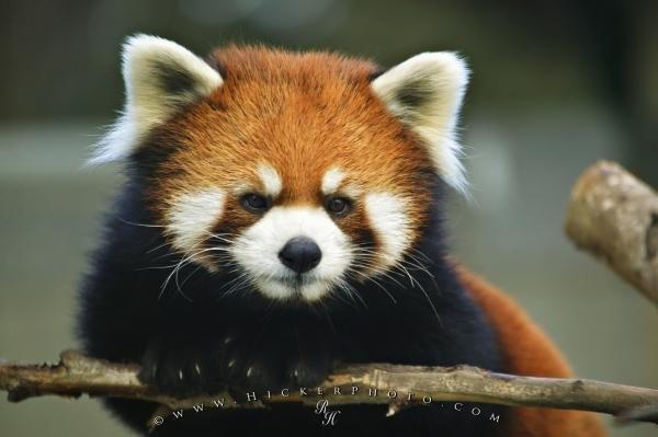 Photo:  Endangered Animal List