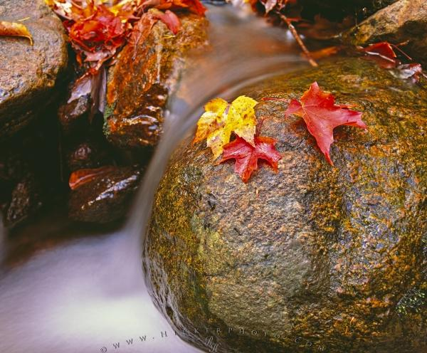 Photo:  Colorful Fall Leaves Flowing Water Bay of Fundy National Park