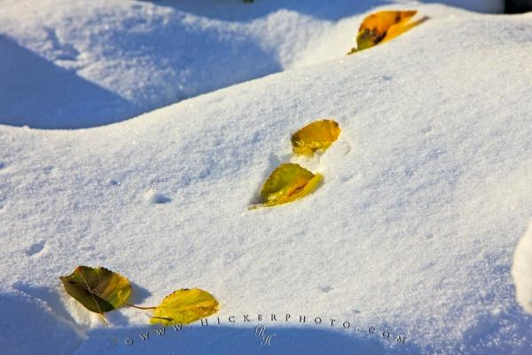 Photo:  Fall Leaves Winter Snow Picture