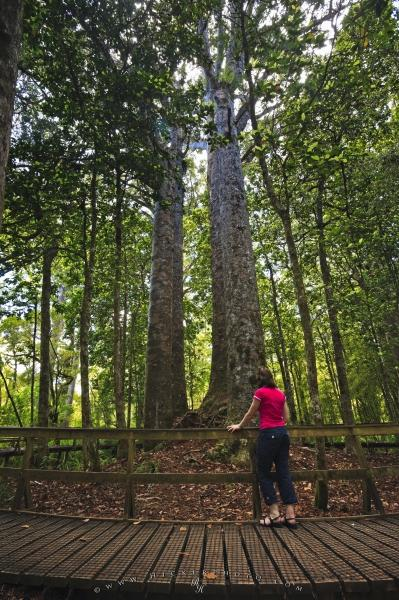 Photo:  Waipoua Kauri Forest Tourist Attractions Northland New Zealand