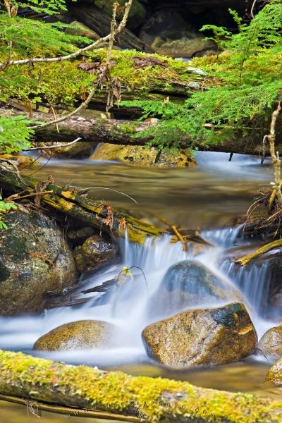 Photo:  Pure Water Forest Stream Picture
