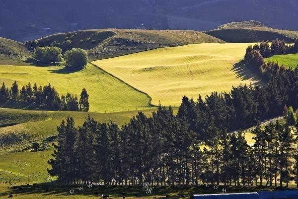 Photo:  New Zealand Rolling Farmland Landscape Otago