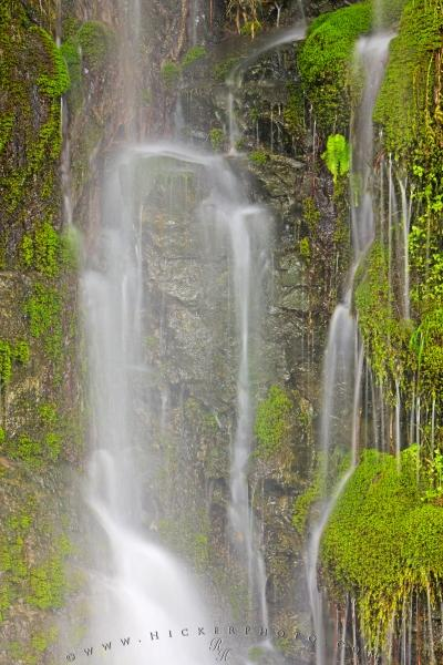 Heavy Rain Flowing Water Stream Lush Moss